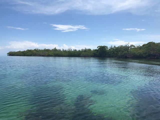 Island Off Coast of Placencia, Belize